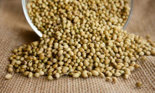 Coriandre : 7 avantages impressionnants des graines de coriandre